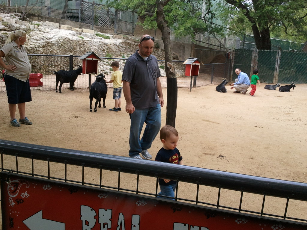 In the petting zoo