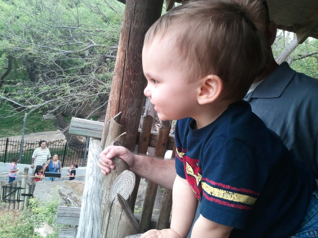 Looking out over the zoo