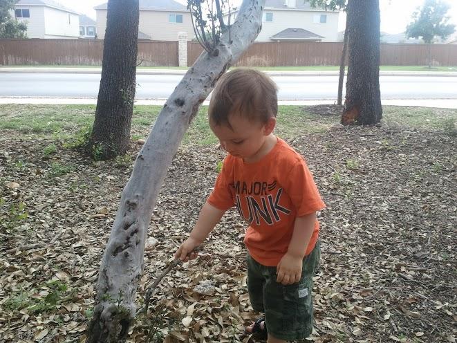 Poking a tree