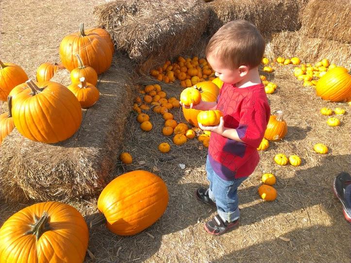 pumpkinpatch10