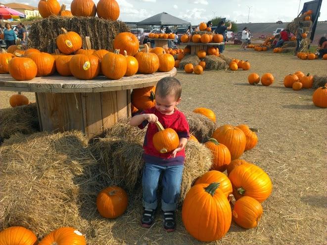 pumpkinpatch6