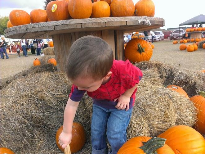 pumpkinpatch7