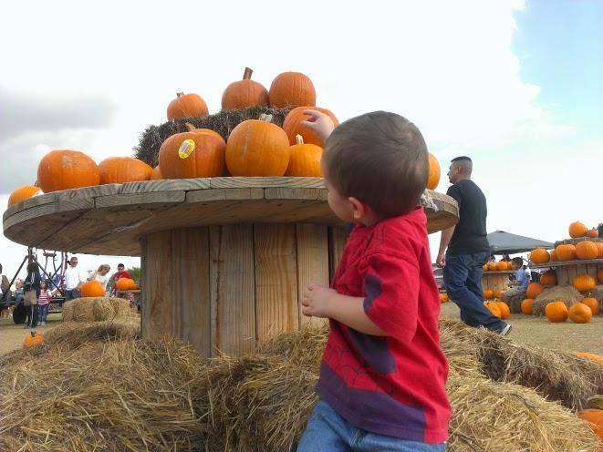 pumpkinpatch8