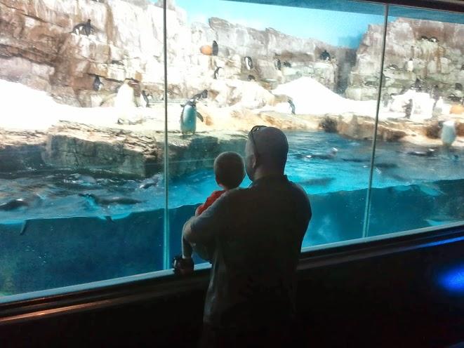 seaworld11